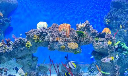 exotic underwater world of shallow water