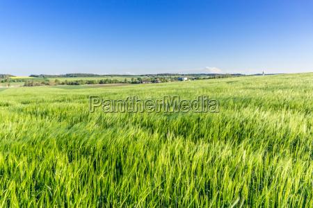 gerstenfeld in may
