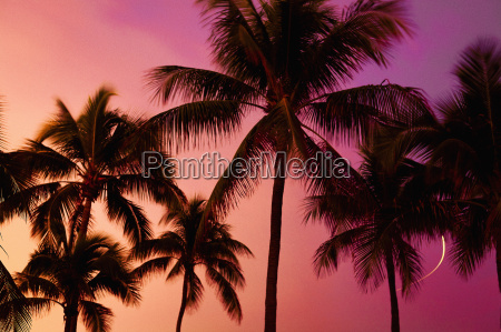 low angle view of silhouette palm