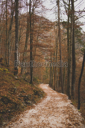footpath passing through trees on mountain