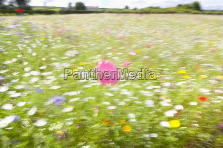 blurred soft focus meadow of wildflowers
