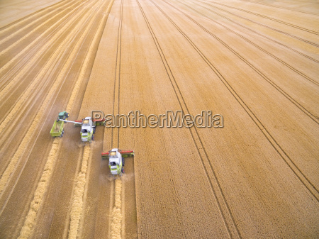aerial view of combine harvesters filling
