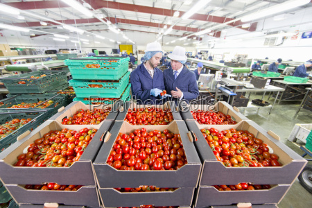 quality control workers inspecting ripe red