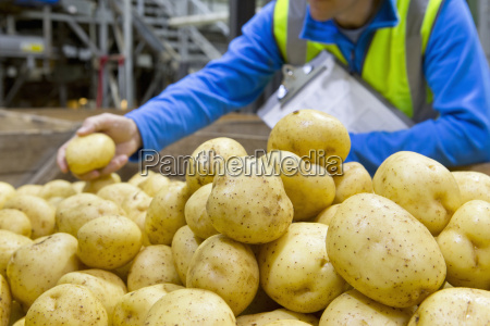 close up worker examining fresh harvested