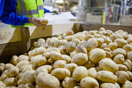 worker with clipboard examining fresh harvested
