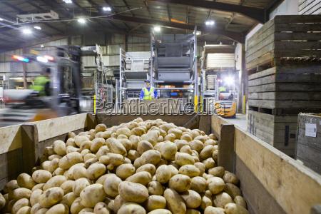 workers in factory behind bin of