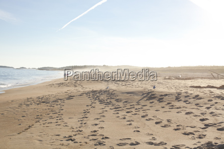 many footprints and bird tracks at