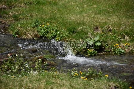 meadow stream bubble water pasture felber