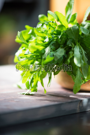 fresh organic rucola leaves