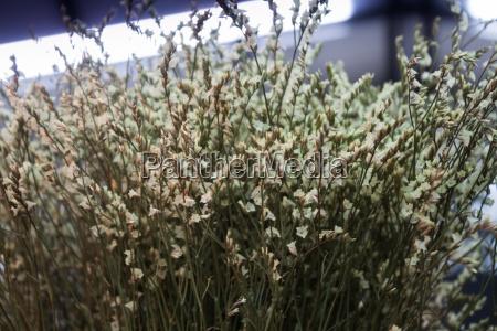 pile white dried flower on blur