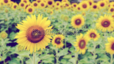 vintage style blur background of the