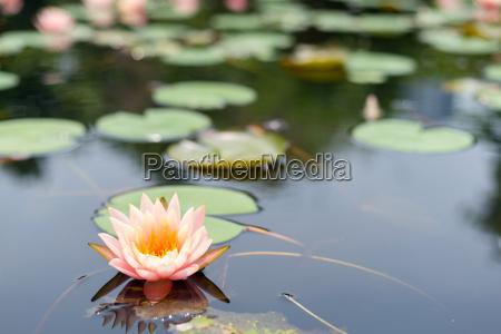 belo agradavel solitario flor planta lindas