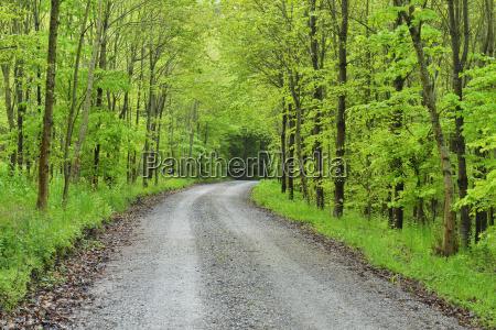 forest road in spring miltenberg schippach