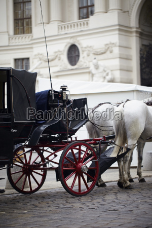 horse drawn carriage for sightseeing tour