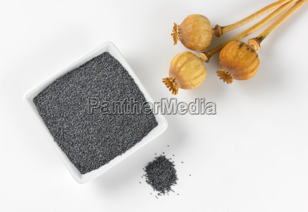 poppy seeds and dried seed heads
