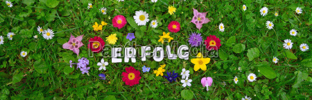 success text on flower meadow