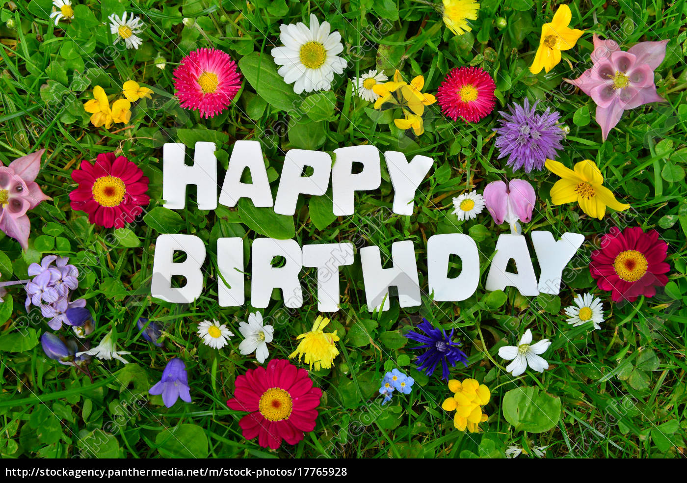 Happy Birthday Text On Colorful Flower Meadow Royalty Free Photo