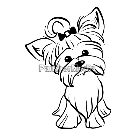 vector sketch funny yorkshire terrier dog