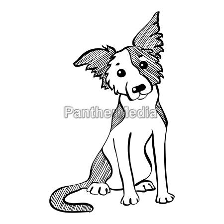 vector sketch funny border collie dog