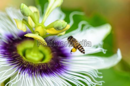 exotic beautiful flower
