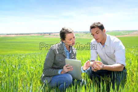 agronomist looking at wheat quality with