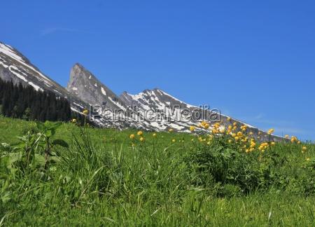 wildflowers and peak of the churfirsten
