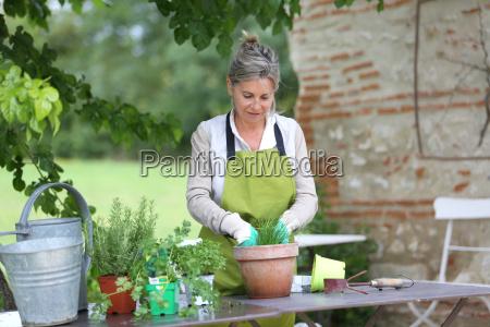 senior woman preparing aromatic herbs in