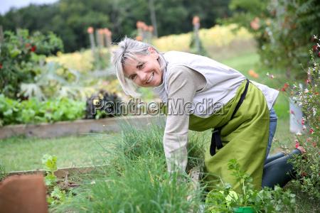senior woman planting aromatic herbs in