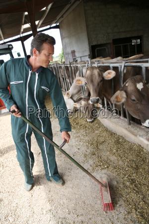 farmer sweeping floor in barn