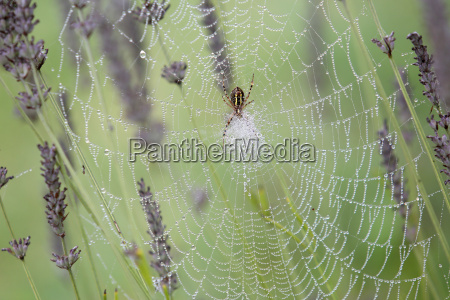 closeup of spiderweb with morning dew