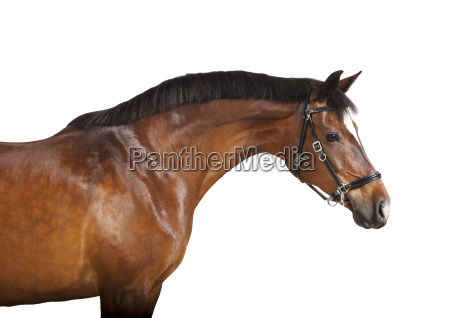 exempted brown horse head