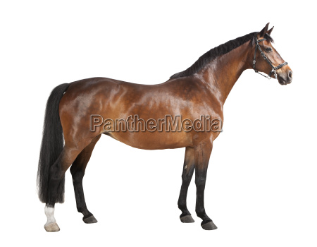 exempted brown horse