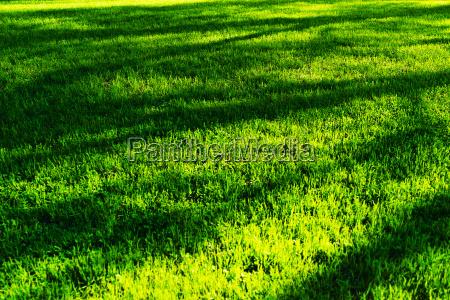 horizontal green grass with tree shadows