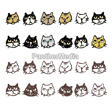 various cats face expression
