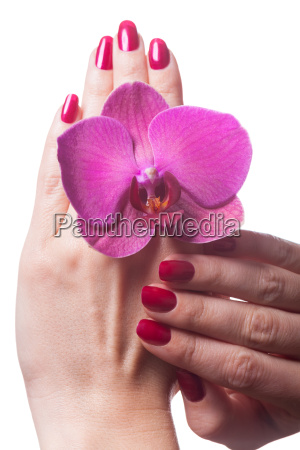manicured fingernails isolated with orchid bloom