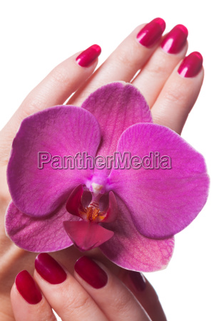 well groomed fingernails isolated with orchid