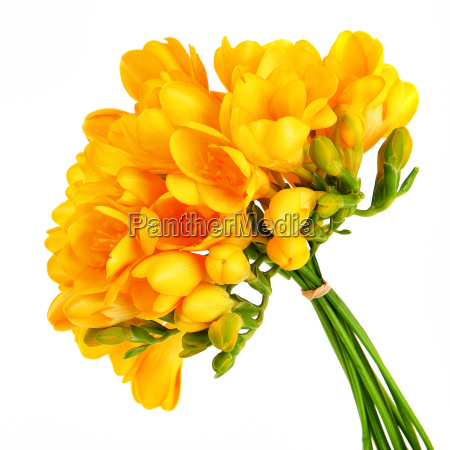 bouquet of a beautiful yellow flowers
