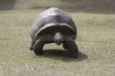 giant tortoise at curieuse island seychelles