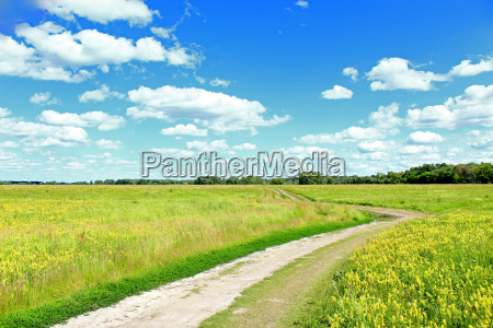 road in the summer field with