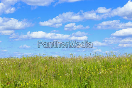 summer field with grass and blue