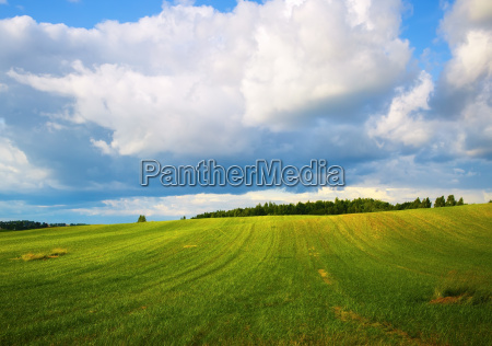 field of green grass and blue