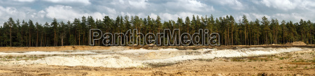 pine forest and sand pit