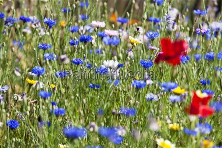 flor planta verao alemanha ao ar