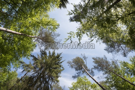 worms eyeview of trees in a