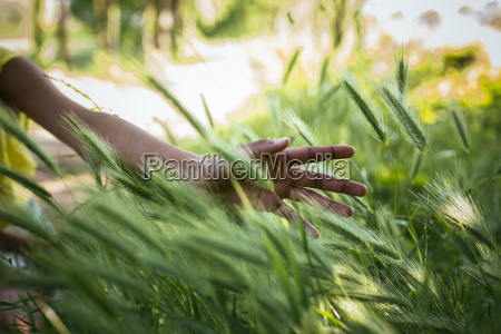 hand of woman touching grasses