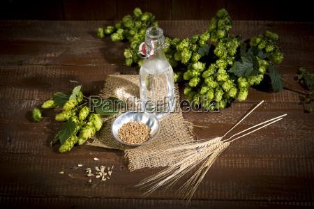 ingedients for beer brewing water barley