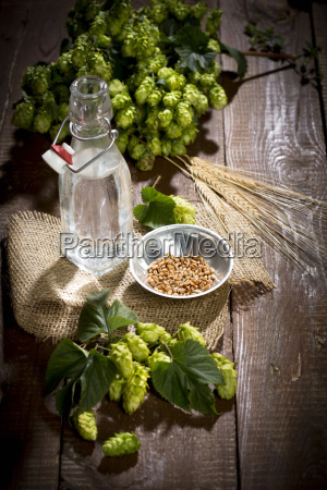 ingedients for beer brewing water barley