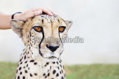 namibia kamanjab mans hand petting a