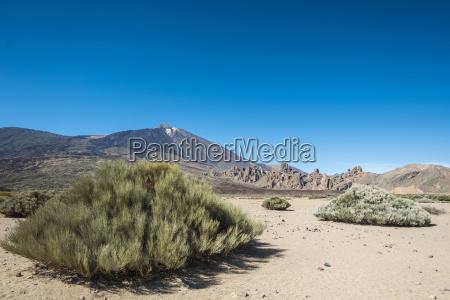 spain tenerife landscape and vegetation in