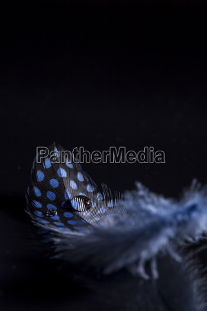 feather and water drops close up